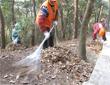 枯枝落叶发酵成有机肥