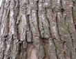 树皮发酵成有机肥的方法