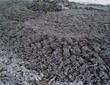 污泥加牛粪发酵成优质有机肥的方法