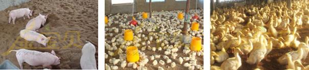 干撒式发酵床