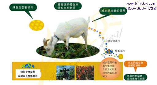 发酵床养羊菌种