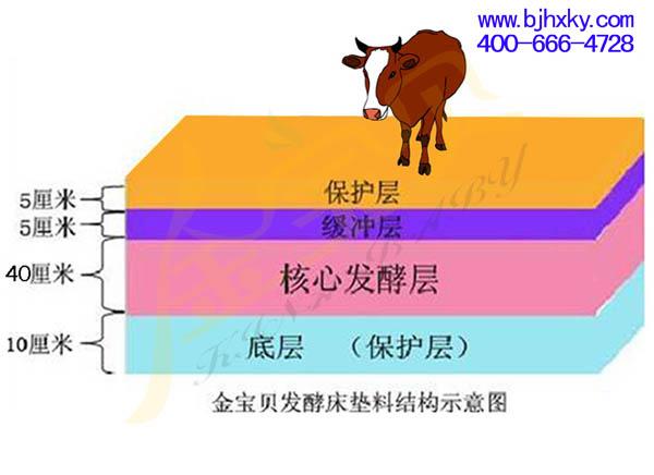 发酵床养牛专用菌种