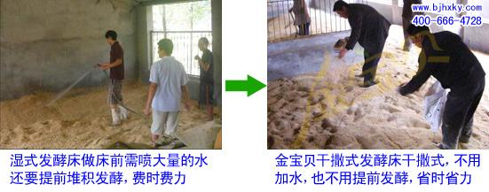 发酵床养野猪菌种
