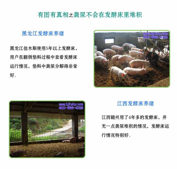 发酵床养猪菌种