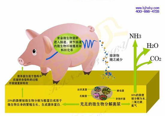 生态养殖技术