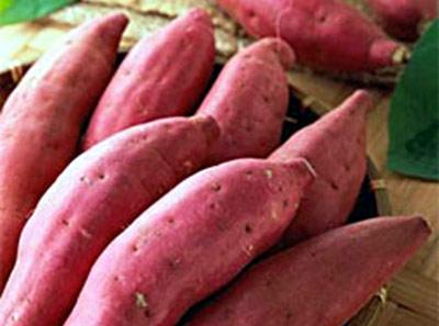 红薯发酵剂