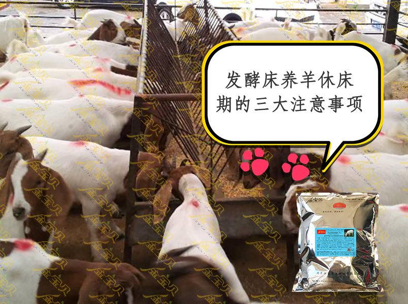 发酵床养羊休床期的三大注意事项.jpg