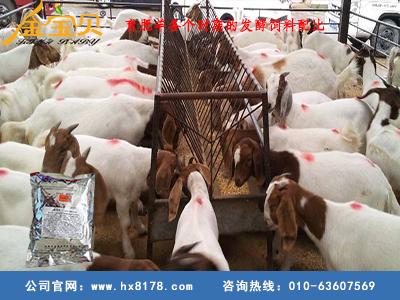 育肥羊各个时期的发酵饲料配比,你知道多少?