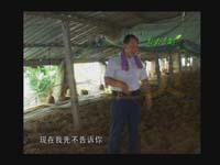 山东电视台采访发酵床养鸭视频